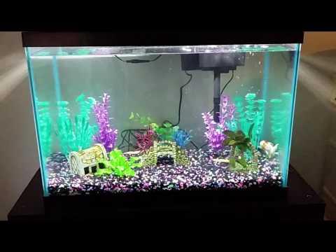 Entry Level Aquarium (Fish Tank) 5 Gallon, 20 Gallon & 50 Gallon