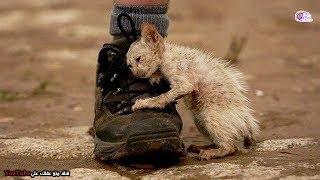 قطة تـنـزف ويهملها الجميع باستثناء شخص واحد قرر إنقاذها - ولكن ما وجده كان مفاجأة كبيرة !!