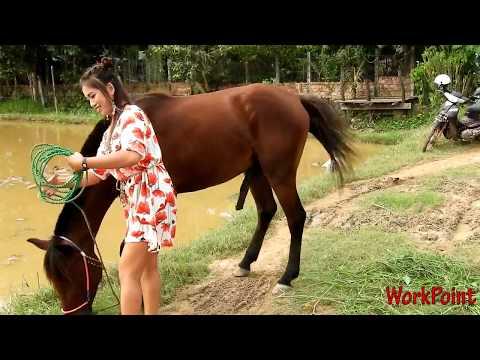 Xxx Mp4 Gadis Cantik Maen Dengan Kuda 3gp Sex