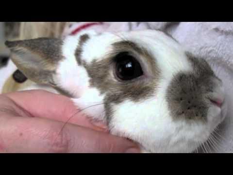 BudgetBunny: Trimming Your Rabbits Nails