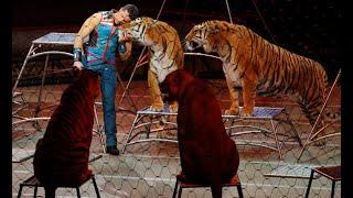 RUSSIAN TIGER CIRCUS