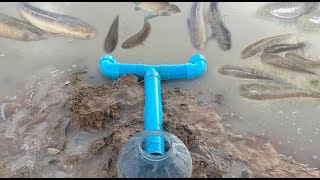 Smart Girl Make Fish Trap Using PVC Pipe Plastic Bottle To Catch A Lot of Fish