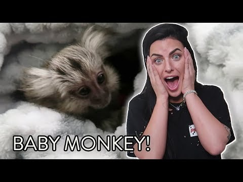 I GOT A NEW PET MONKEY?!