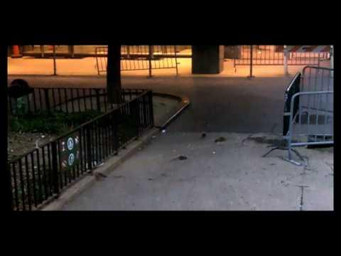 Rat Zoo: Collect Pond Park - Downtown Manhattan