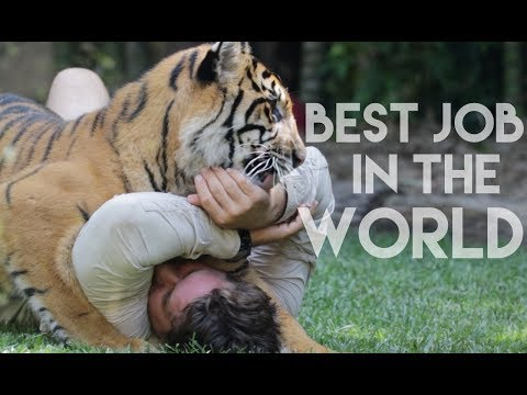 BEST JOB IN THE WORLD @ Australia Zoo, QLD || PantherPeople