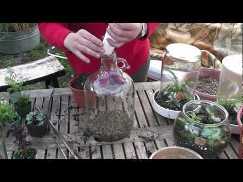 How to make a bottle terrarium