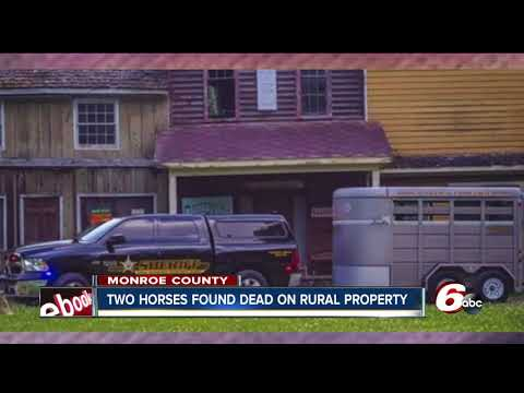 Two horses found dead, one severely malnourished on Monroe County property