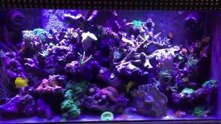 90g Reef Tour (300gal system)