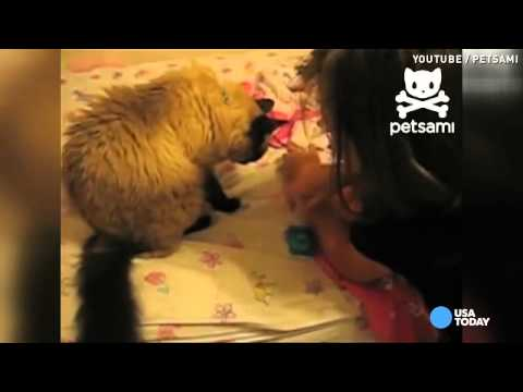 Cat helps little girl yank her tooth out