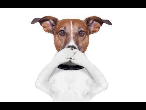 Home Remedies for Dogs Bad Breath