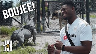 Inside Look: JuJu & Boujee at the Dog Park
