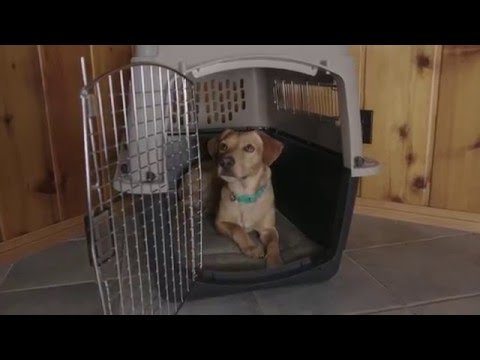 Petmate Kennels & Carriers