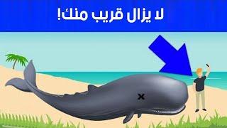 """هل تعلم ماذا يحدث لو اقتربت من الحوت الميت """"لن تصدق مفاجأة"""""""