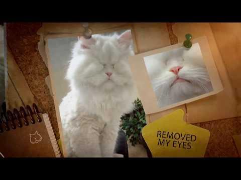 Meet Moet the Blind Cat