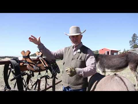 Adjusting Your Donkey Pack Saddle