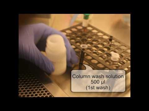 DNA Extraction Reliaprep blood gDNA miniprep system protocol