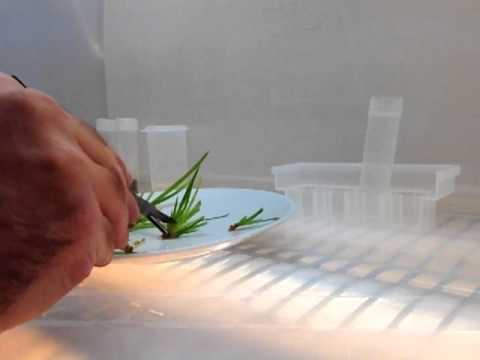 Plant tissue culture cloning clean hood transfers