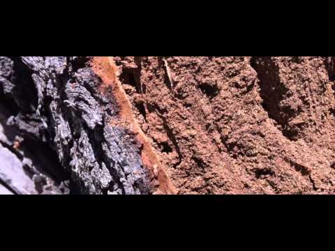Termites Almond Tree