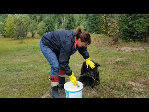 Skunk Cleaning 2