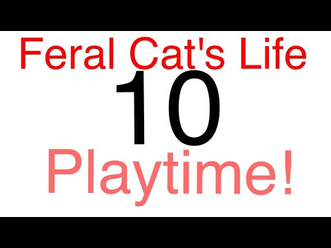 Feral Cat's Life 10 - Playtime