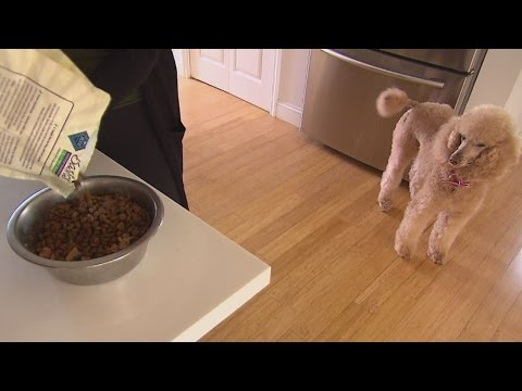 How You Can Really Tell What Is Inside Your Dog's Favorite Food