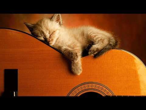 Ultimate Relaxing Guitar Music Collection | #playlist