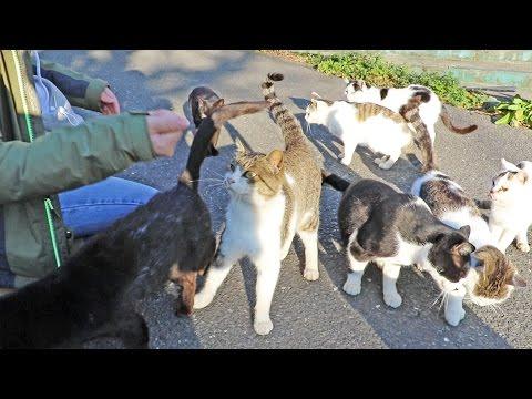 Japan's Cat Island - Cat Attack!