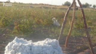 Пахтада бедарак йўқолган фермернинг жасади 5 кундан сўнг зовурдан топилди