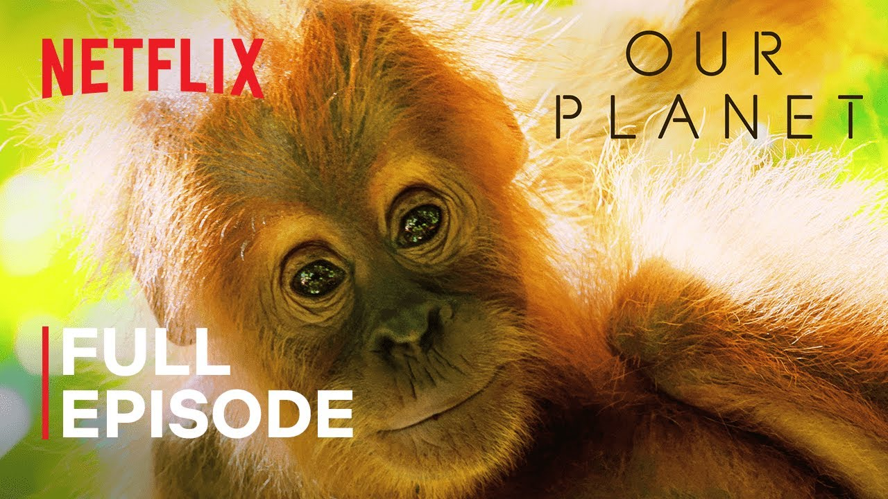 Our Planet   Jungles   FULL EPISODE   Netflix