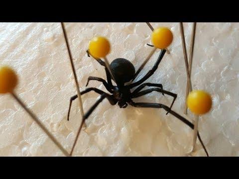 SPIDER SPECIMEN FAIL