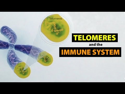 Telomeres and the Immune System
