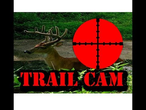 Moultrie Trail Camera 2017 --Deer, Coyote, Raccoon