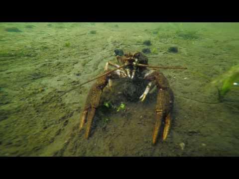 Scuba Diving UK  River Waveney at Ellingham Mill