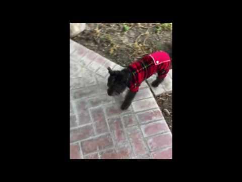 Dog in a onesie