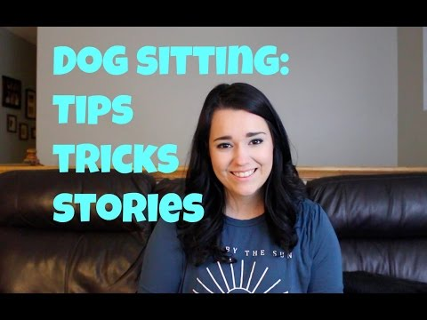 Dog Sitting: Tips, Tricks, and Stories