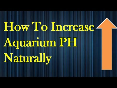 How to Increase PH in Aquarium Naturally Simple and Quick Results