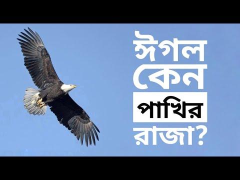 ঈগলের ৩টি নীতি যা তোমার দৃষ্টিভঙ্গি বদলে দেবে (3 Things Eagles Do That Can Change Your Life!)