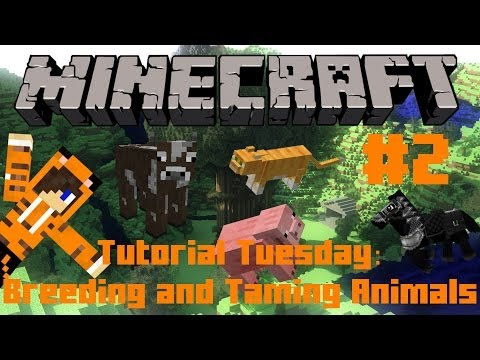 HOW TO TAME AND BREED IN MINECRAFT!: Tutorial Tuesday w/ Tiger #2 (Minecraft)