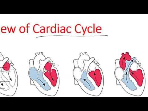 Cardiac cycle of heart