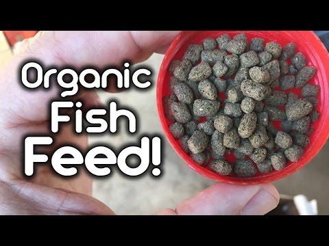 Organic Fish Feed for Aquaponics