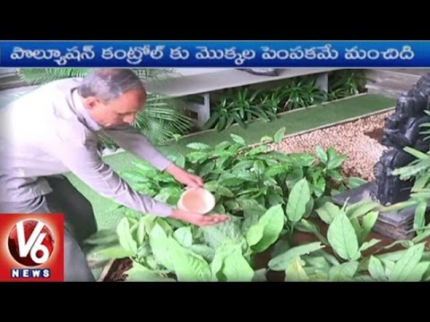 Indoor Pollution | Planting Trees Around Houses Can Purify The Air | V6 News