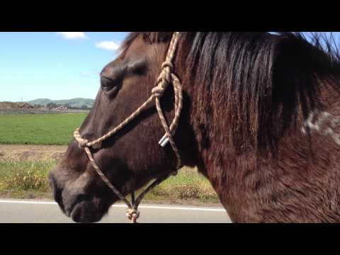 Sacking Out Your Horse to Dead Animals - Why Horses Avoid Dead Animals- Rick Gore Horsemanship