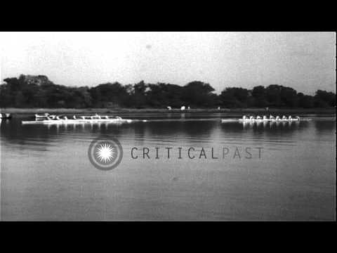 Washington crew wins the rowing finals and qualify for the Olympics. HD Stock Footage