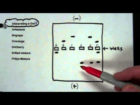 How to read your gel electrophoresis results using dyes
