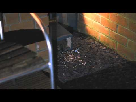 The Hedgehog in Our Garden [HD]