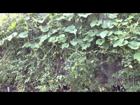 Self-Seeded Veggie Garden