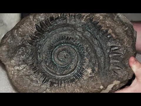 20 Unusual Creatures that Went Extinct