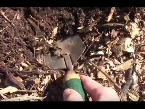 Adding Wood Chips To Improve Sandy Soil. AKA Back to Eden, or No Dig.