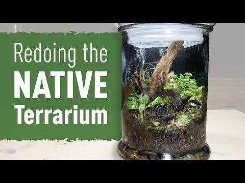 Redoing the Native Terrarium from HTT ep. 3