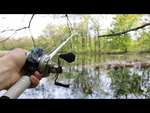 Sight Fishing SHALLOW Swamps for Bowfin